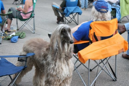 Dog at Robinella Concert, Market Square, Knoxville, May 2013