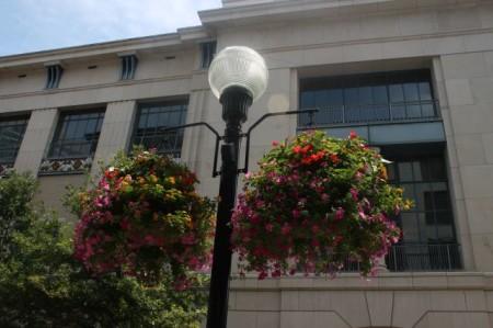 Flowers in Downtown Nashville, July 2013