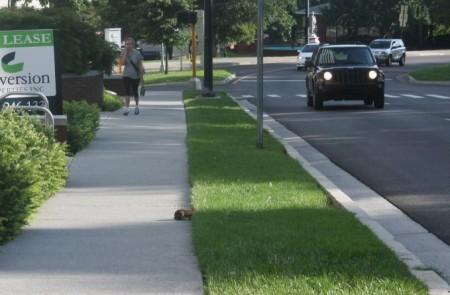 Rabbit beside Summit Hill, Knoxville, Summer of 2013