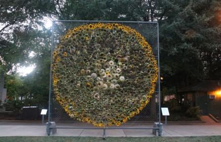 Sunflower Installation on Krutch Park, Knoxville, September 2013