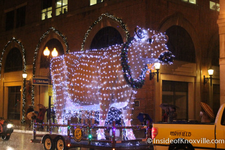 Mayfield Cow at the Knoxville Christmas Parade 2013
