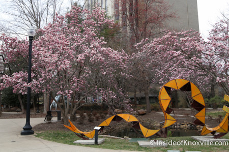 First Spring Color in the city, Krutch Park, Knoxville, March 2014