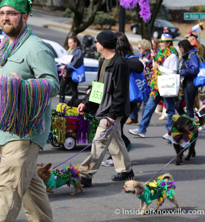 Mardi Growl, Knoxville, March 2014