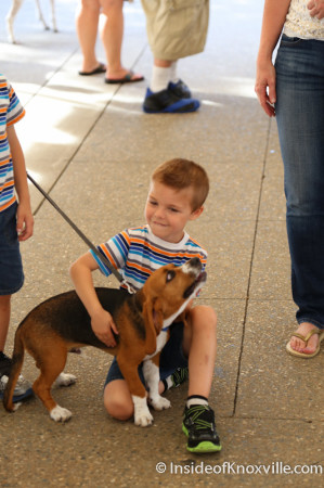 Bark in the Park, Knoxville, June 2014