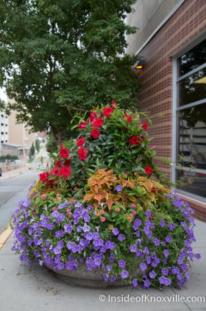 Greg Blankenship's Floral Handiwork, Knoxville, August 2014