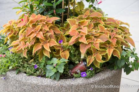 Greg Blankenship's Floral Handiwork sometimes gets abused, Knoxville, August 2014
