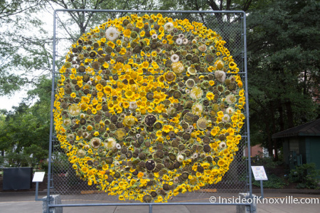 Sunflower Project, Knoxville, September 2014-1