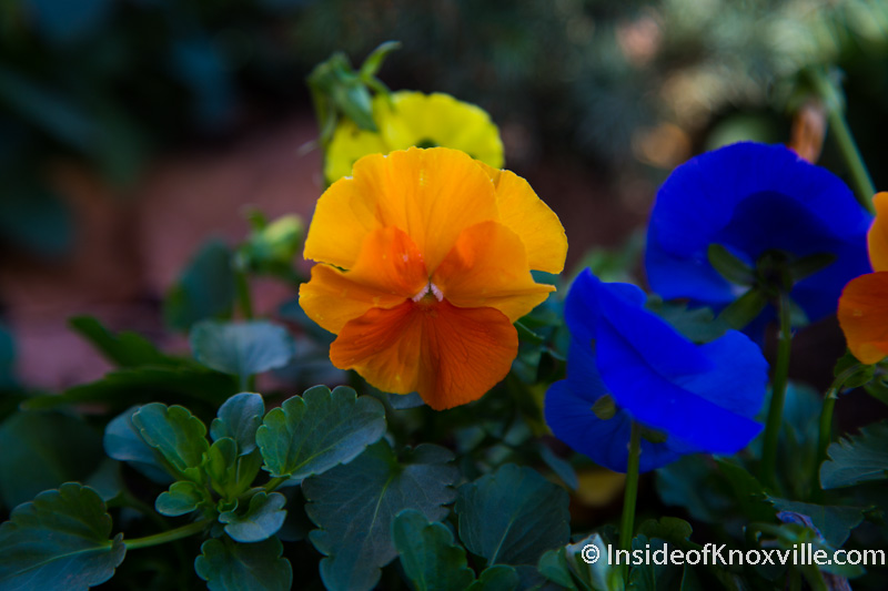 Blessing of the Pansies: A Quiet Urban Affair