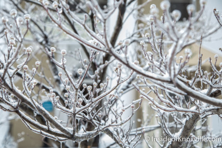 Ice, Knoxville, February 2015