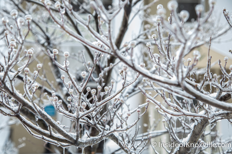 Ice and Snow in the City, February 2015
