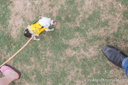 Tiny Dog (Feet included for perspective),Children's Festival of Reading, Knoxville, May 2015