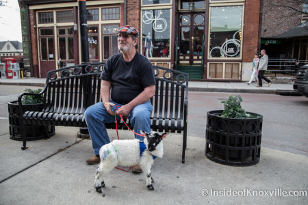 Goat Outside Boyd's Jig and Reel, Knoxville, March, 2015