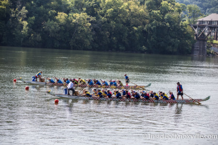Dragonboat Races, Tennessee River, Knoxville, August 2015