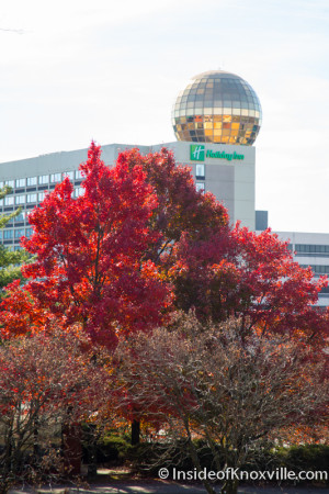 Thanksgiving Day in the City, Knoxville, November 2015