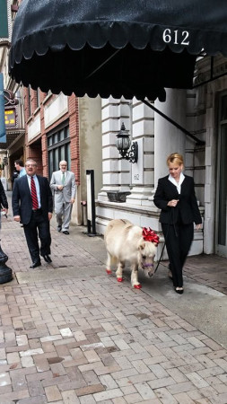 """Best Behavior Video Shoot for """"What Do You Want for Christmas?,"""" Knoxville, December 2015"""