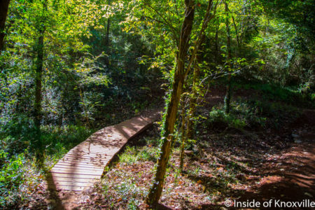Baker Creek Reserve, Urban Wilderness, Knoxville, October 2016
