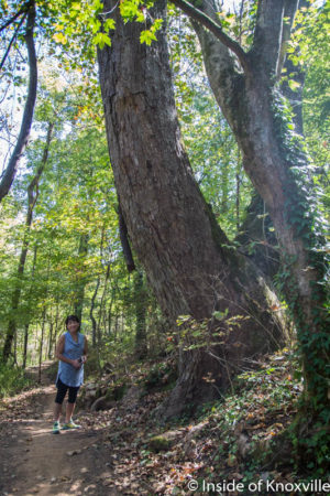 Carol Evans, Legacy Parks Foundation Executive Director, Baker Creek Reserve, Urban Wilderness, Knoxville, October 2016