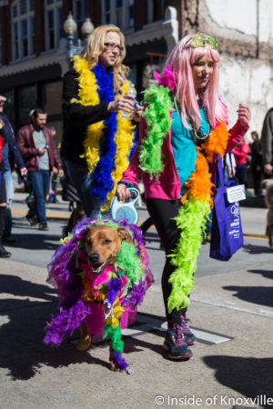 Mardi Growl, Knoxville, March 2018
