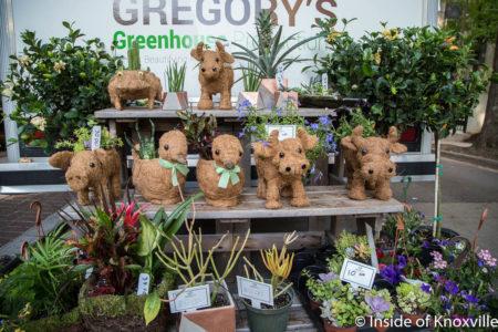 Gregory's Greenhouse, Dogwood Arts Festival, Market Square, Knoxville, April 2018