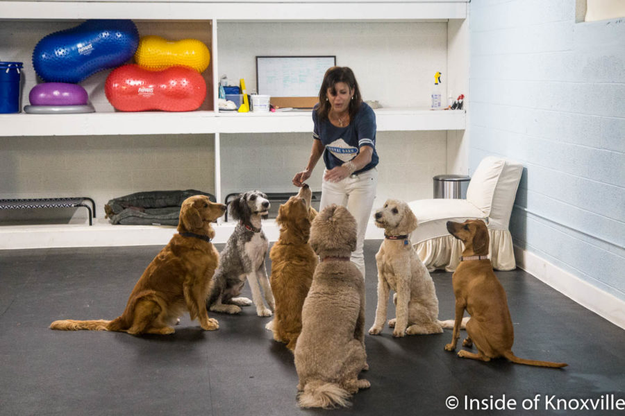 Royal Bark Social Club Brings Dog Daycare and More to Downtown